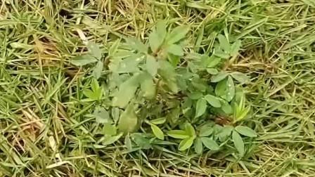 请欣赏《我是一颗小草》  希望喜欢