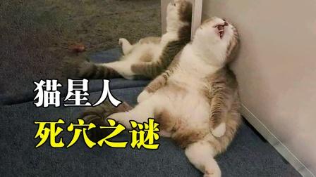 """为什么抓住后脖颈肉,猫咪就会被石化?这""""死穴""""你身上也存在!"""