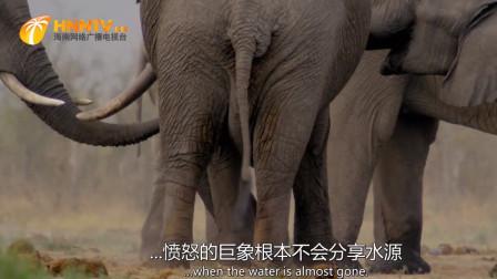 愤怒的大象跟同类争夺水源,连抽带踹无所不用,镜头拍下过程