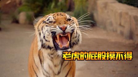 都说老虎的屁股摸不得,男子偏偏不信邪,结果悲剧了《紧急呼救》
