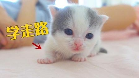 小奶猫还没学会走路,就想着跑,结果滑了一跤!