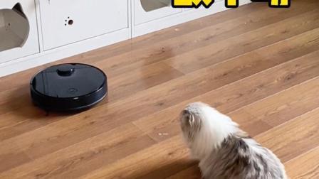 当扫地机器人遇上猫咪:敌不动,我也不动