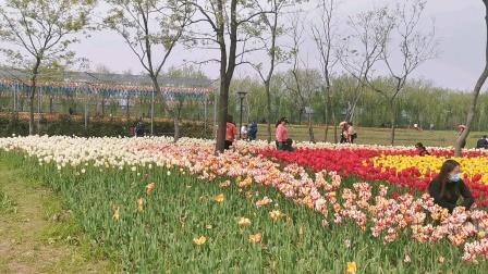 芜湖六郎湿地花海