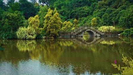 长江之滨桂圆林