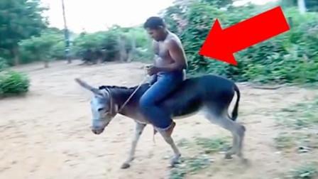 男子非要骑驴,奈何犟不过驴脾气,直接摔了个倒栽葱