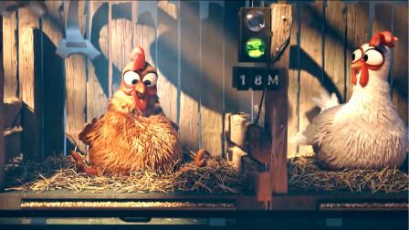 公鸡不下蛋就会被端上餐桌,鸡群为了救它,齐心协力帮公鸡下蛋