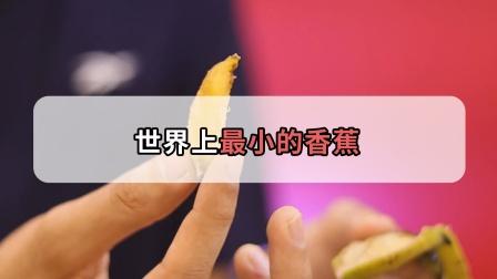 世界上超小的袖珍香蕉,偏偏长在大香蕉上,一口一个真过瘾