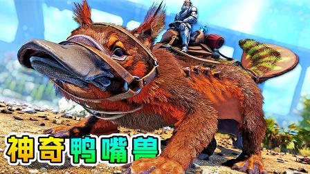 方舟60变形记:鸭嘴兽出生就变奴隶,为脱离苦海,大战泰克恐龙