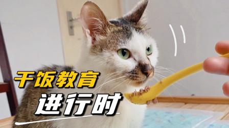 被虐小猫获救第11天:努力学习干饭技术坚强求生