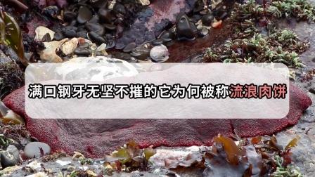 喜欢啃石头!牙齿硬度是人类的三倍,却被当地人戏称为流浪肉饼