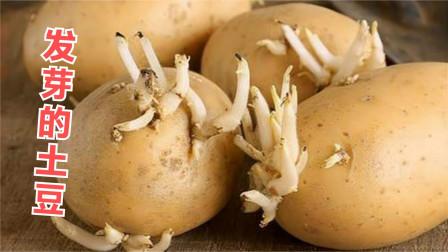 发芽土豆别扔掉,留在家中有大用处,好多人还不清楚,家家都实用