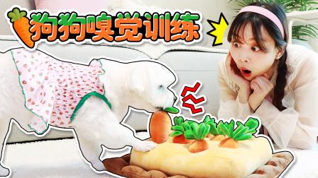 狗狗嗅觉训练!coco能否顺利找到胡萝卜地里隐藏的食物呢?