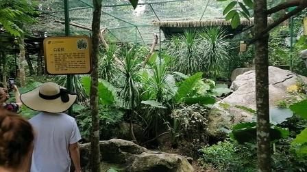 20210617,三亚市呀诺达热带雨林风景区