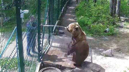 饲养员正在冲洗地面,一只棕熊走了过来,下秒憋住别笑