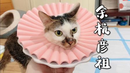 被虐流浪小猫终于转危为安,好心网友千里之外寄来新头套,感动