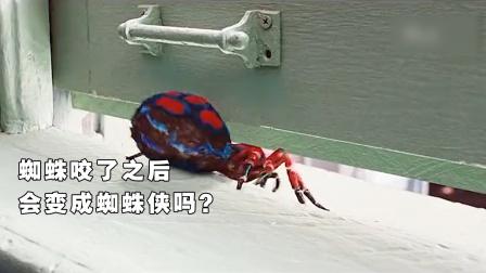 吸血鬼助手:蜘蛛咬了之后会变成蜘蛛侠吗①