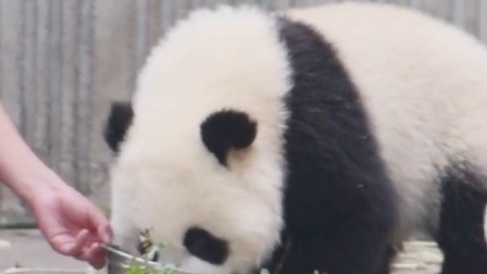 大熊猫 :啊啊啊!救命啊,绑架啦~
