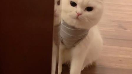 喜欢躲猫猫