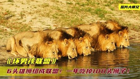 6头雄狮组成联盟,屠尽幼崽霸占母狮,一年内吃掉100头狮子!