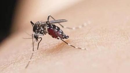 看完秒懂!为什么被蚊子叮的总是你?