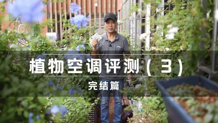 植物空调评测(3),封闭环境有效,确实能促进蒸腾