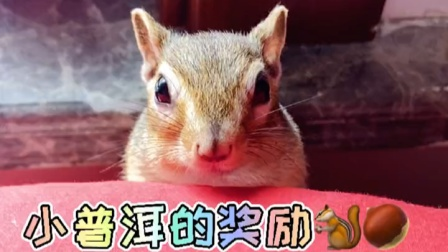 精灵球里真的有精灵?其实是听话的小松鼠!