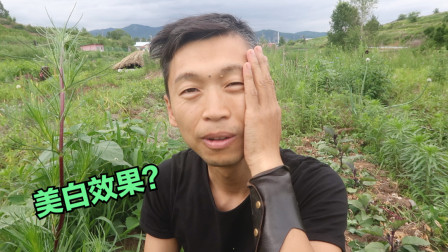 自学植物:「黎草」叶子背面有白色粉末,涂抹脸上看看效果吧!