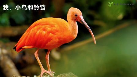 《我、小鸟和铃铛》——李弈辰朗诵视频