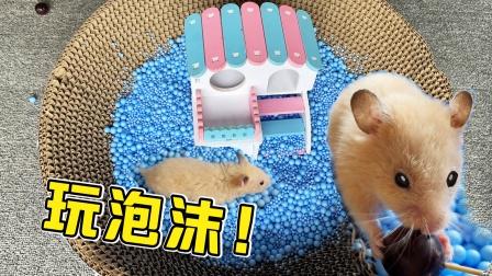 小仓鼠在蓝色泡沫球里跑来跑去的玩,有趣