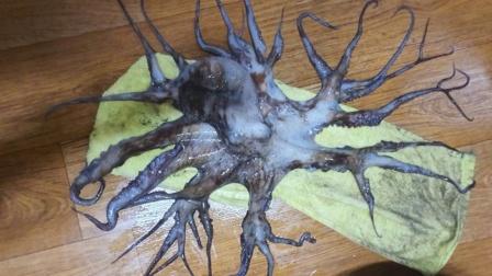 32条腿异形章鱼被捕获 腿呈树枝状散开渔民吓傻
