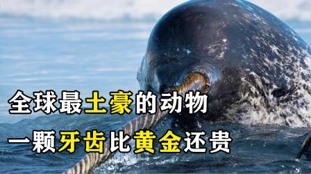 """全球最""""土豪""""的动物,牙齿比黄金还贵!"""