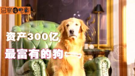 世界上最富有的狗,身价高达300亿,奇幻爆笑片