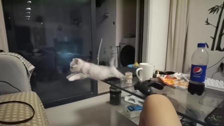 狸花猫:糟糕,后驱启动失败!