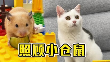 主人生病了,小猫咪照顾主人和小仓鼠,感动