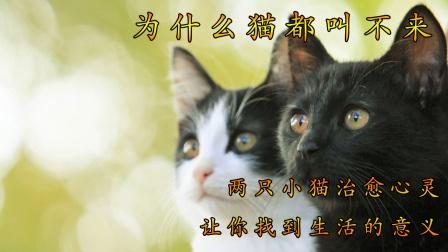 两只小猫治愈心灵,让你找到生活的意义01