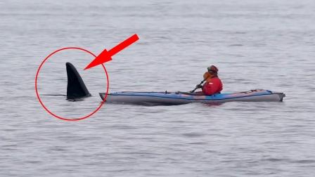 男子海上划艇,突然水中露出巨大鱼鳍,下一秒惊险一幕发生了!