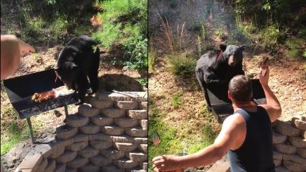 男子户外烧烤,突然黑熊袭击烧烤架!这想吃烤熊掌了?