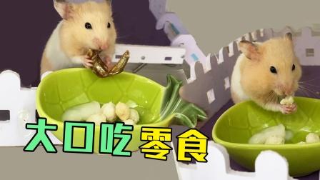 主人亲自给仓鼠做营养品,仓鼠大口大口的吃