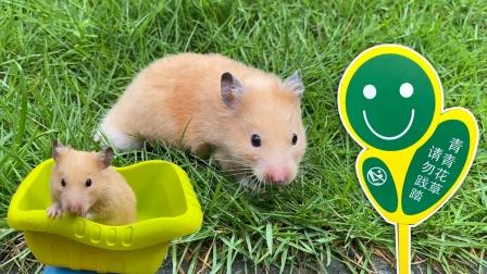 小仓鼠不听主人劝告,践踏草坪,被关起来