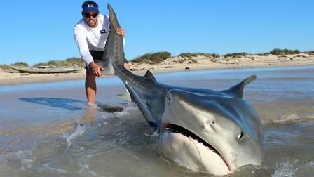 男子钓到鲨鱼,下一秒鳄鱼紧跟上岸抢食!