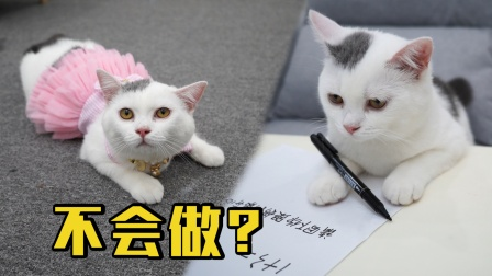 小猫咪有道题目不会做,主人知道后哭了