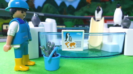 小哥哥每天的任务是照顾企鹅