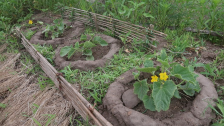 自己手工DIY,搭建的菜园小篱笆,给「香瓜」小苗建个迷你别墅!