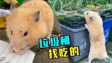 小仓鼠流浪街头,又饿又累在垃圾桶里找吃的