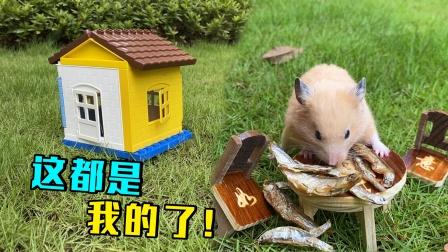 小仓鼠流浪到没人住的房子里面休息,好可爱