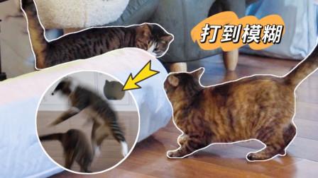 社会猫为抢新地盘跳起来互扇耳光,我到底该不该劝?