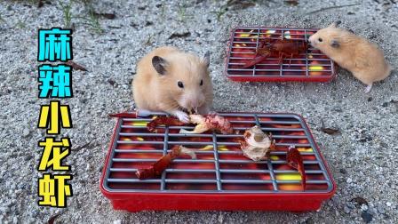 小仓鼠用烧烤架做麻辣小龙虾,吃起来真香