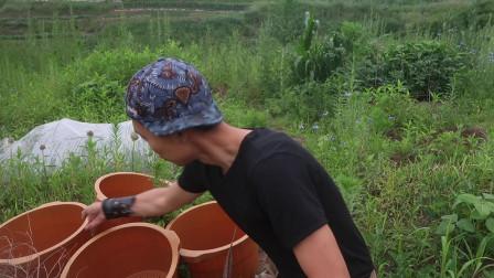 菜园安置:五个塑料桶用来发酵,可反复使用的「堆肥系统」
