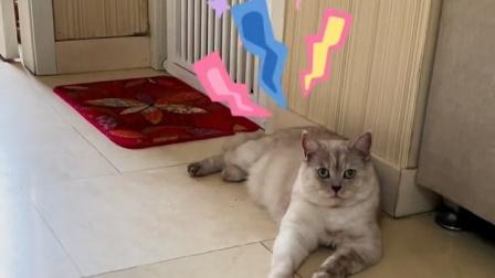 原来猫咪真的通人性,真是人类的好朋友!