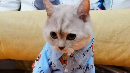 猫咪穿鞋也太好笑了吧,我没忍住!